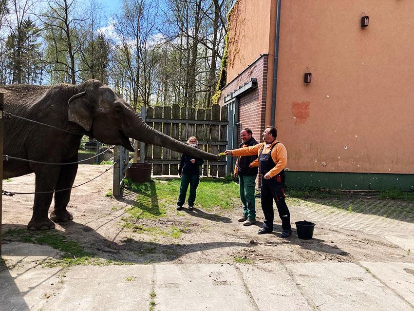 Elefantenhaus Cottbus